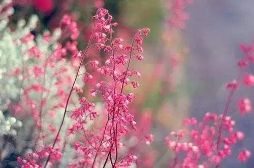 生活情感的句子:生活就是要逼自己变得逆来顺受,宠辱不惊