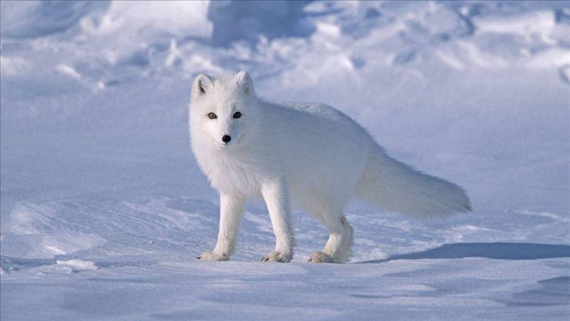 内蒙古包头白狐沟的传说