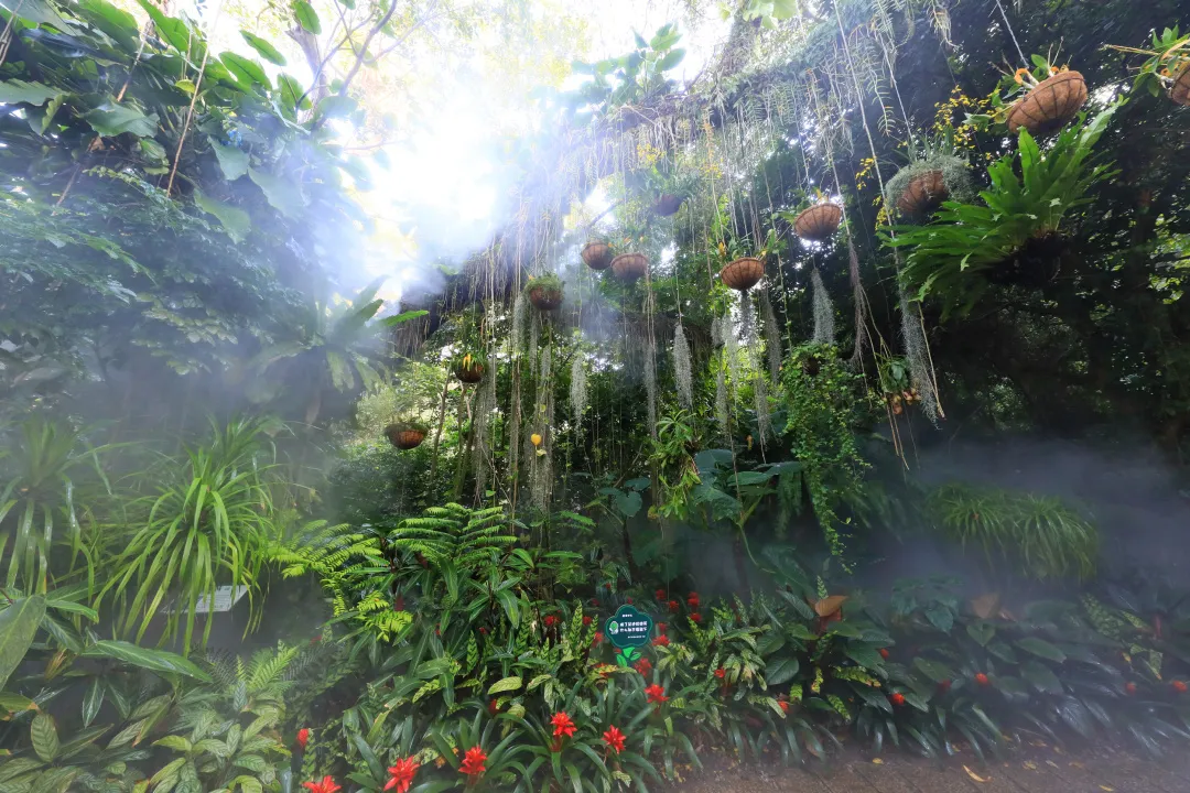 植物园雨林雾森时间调整,还将有这些变化
