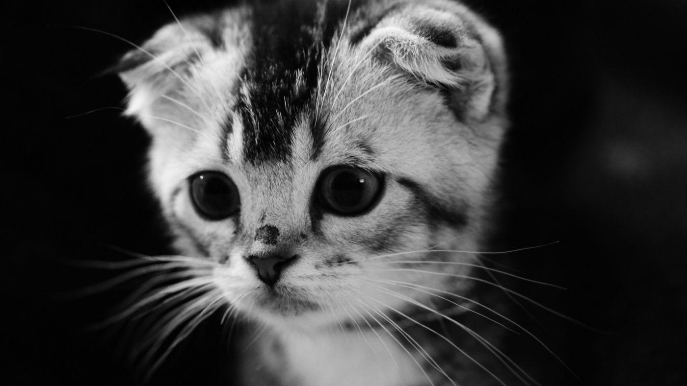 """民間故事:你家養的貓,不一定是寵物,還可能是""""哭喪貓"""""""
