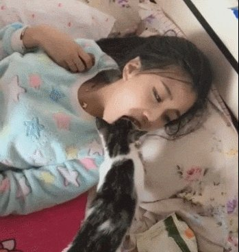 养猫后你都有哪些小怪癖?猫:歪,妖妖灵吗?我的铲屎官有病啊