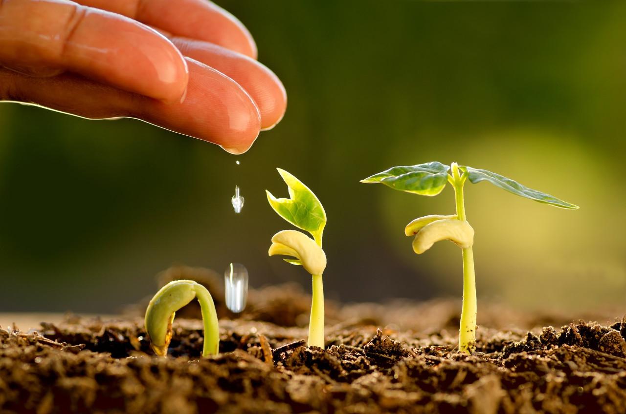 土壤修复多做减法