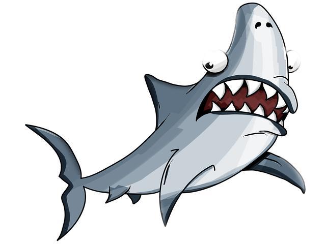 shark是什么意思(shark译中文是什么意思)