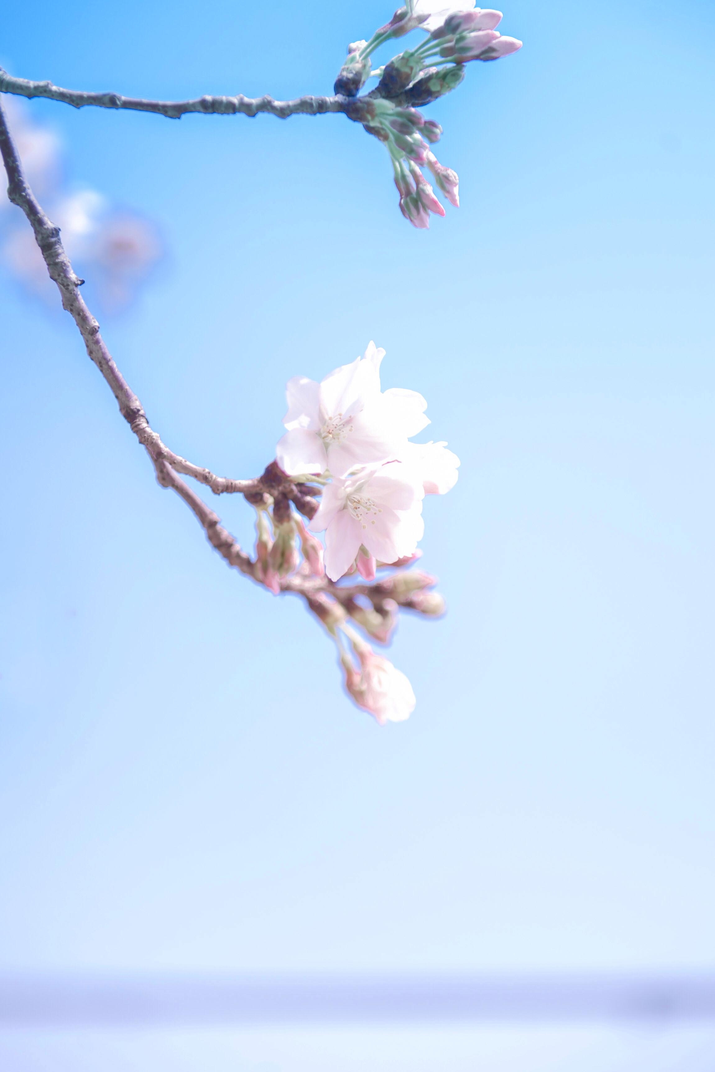 跨越山海 共迎花开,在最美的季节,记录下珍贵的重逢!