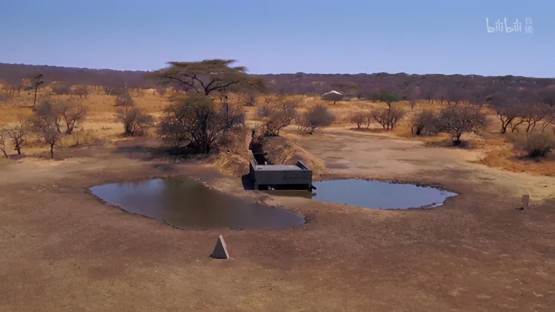 如果在非洲挖个水坑会发生什么?