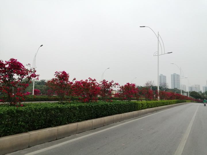 """南宁一路繁花似锦,车像开在巨大的""""红绸带""""中,美得令人心醉"""