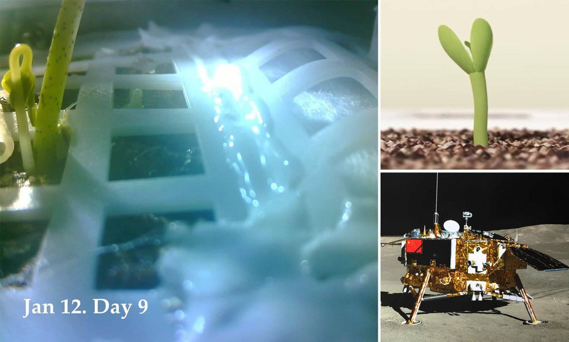 在月亮上,我国种的第一株植物发芽啦,那么,这意味着什么呢?