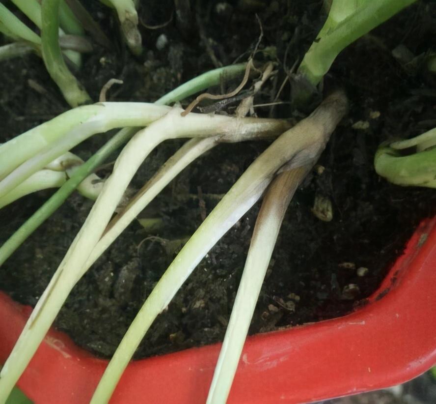 """4月养花,浇水别踩""""4个坑"""",要不然植物黄叶、枯枝、落花苞 家务 卫生 第2张"""