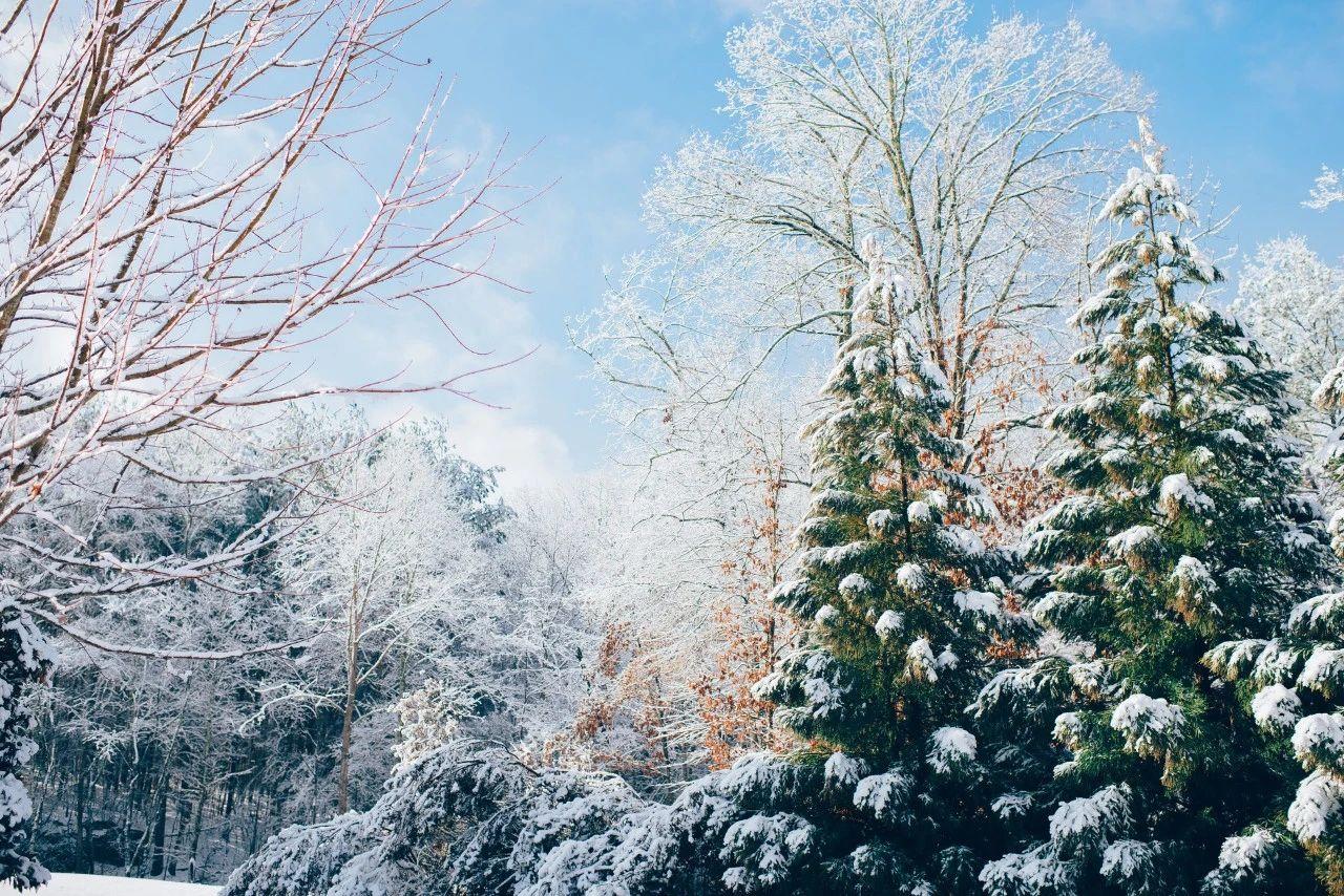 8首咏雪诗词,冬景似春华,莫负好时光
