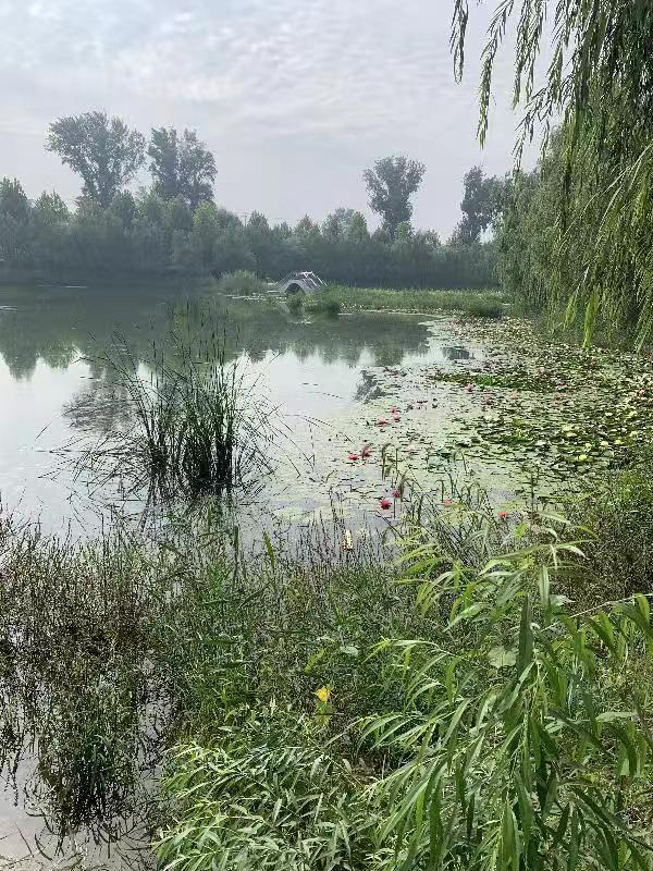 北京整治农村小微水体668条:臭水沟变绿地、荷塘、公园