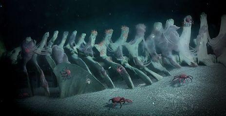 什么是鲸落,一鲸落万物生大海中最伟大最凄美的葬礼
