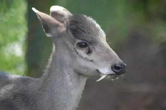 這60種動物,太罕見了,你可能見過的沒幾個,你喜歡哪個呢?