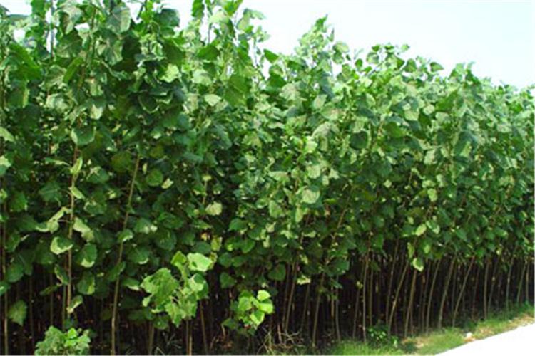 今年农村种植什么利润高呢?这几种都比较好,可以参考