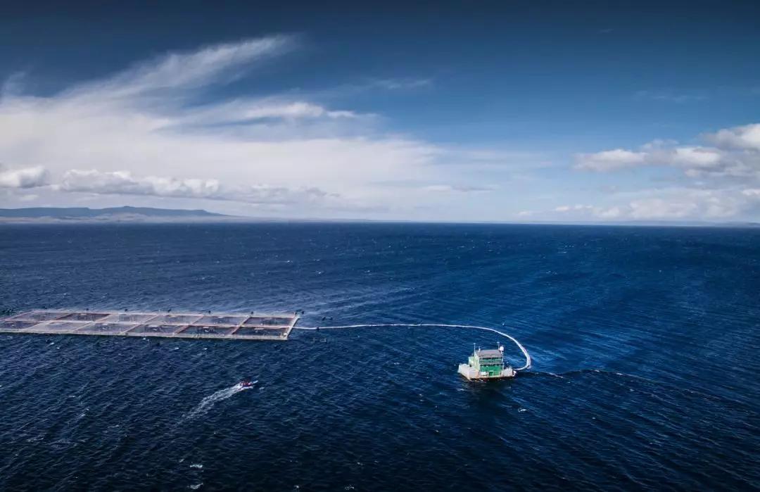 澳洲三文鱼企业濒临破产,引得国际肉企,矿产巨头争相竞标