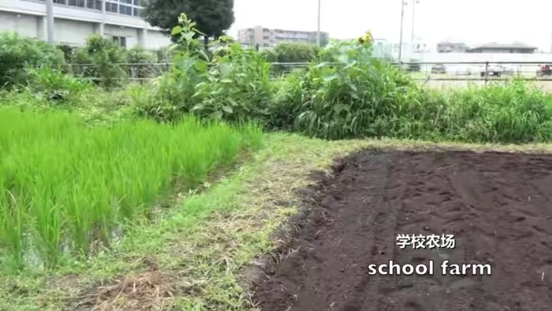 日本儿童健康居全球之首,看到他们的午餐,网友:国内学校难做到