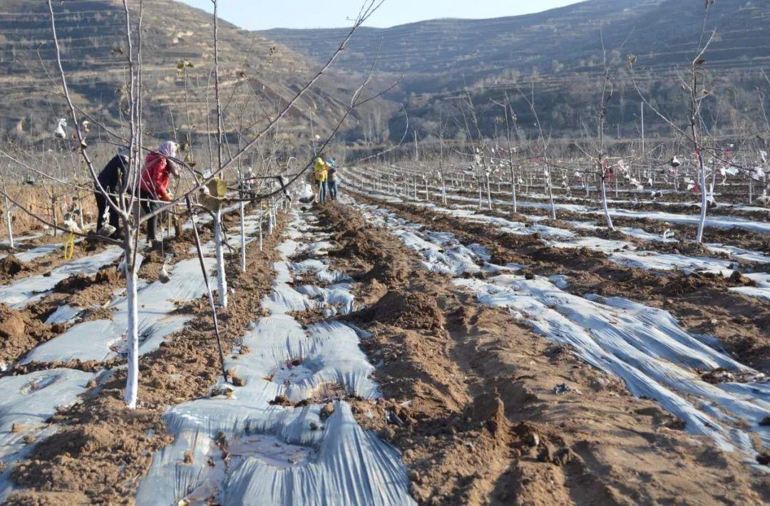 农作物害虫冬防措施