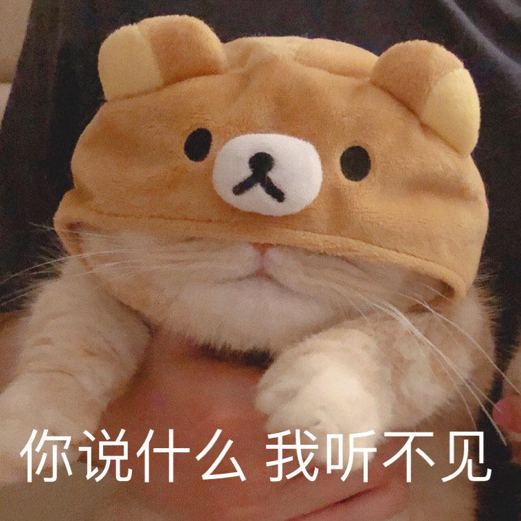 猫咪表情包  生气专用表情包