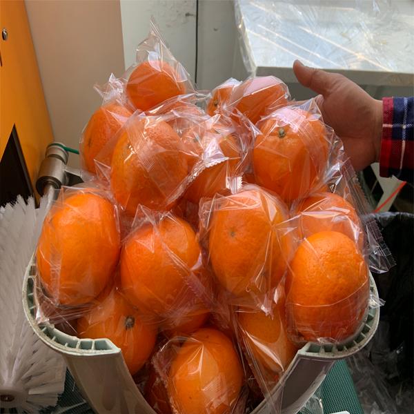 沃柑包装机 橙子包装机 水果包装机厂家