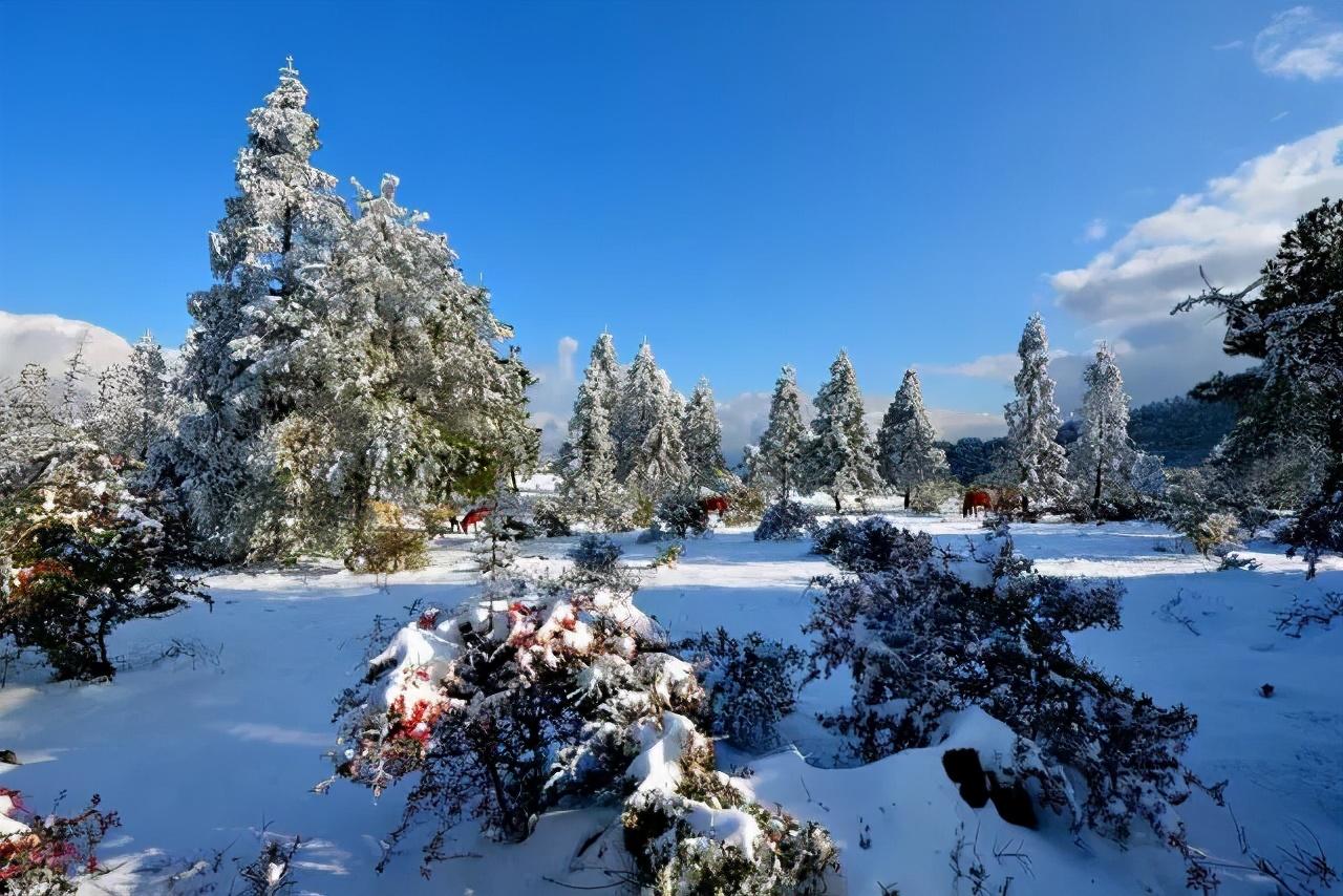 欢乐冰雪季即将欢乐开启!这个冬天,我们石柱见
