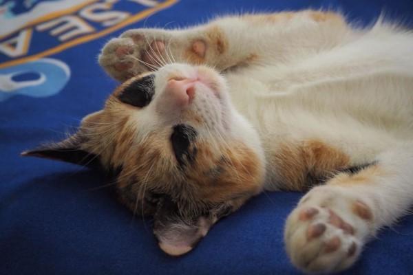 因为罗志祥,这只猫火了