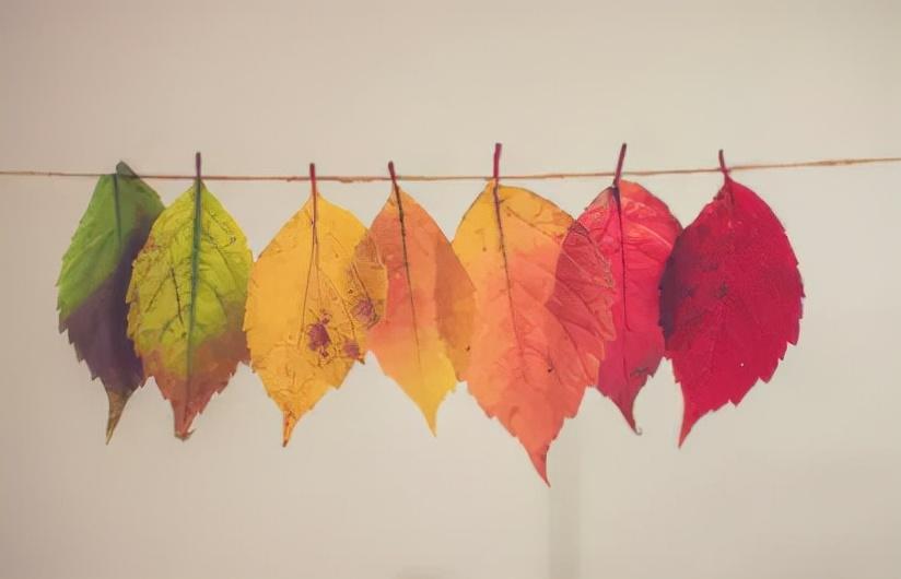 天凉好个秋表达的情感(天凉好个秋的寓意)