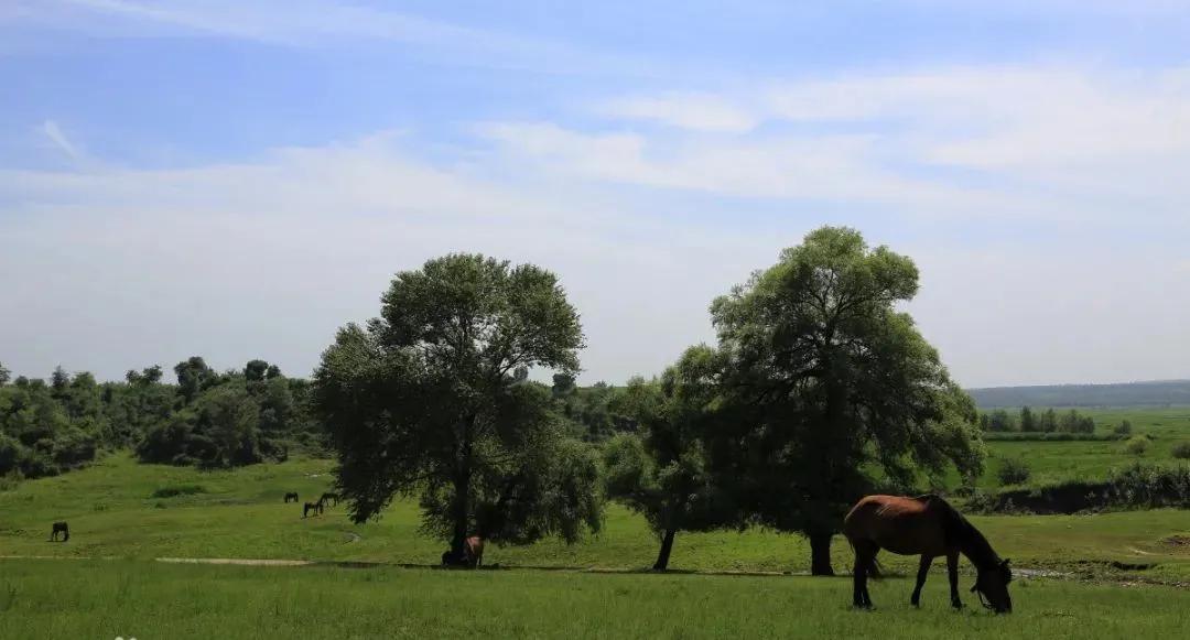 """""""美丽中国 · 固废智慧循环""""系列1—优然牧业奶牛垫料循环再生项目"""