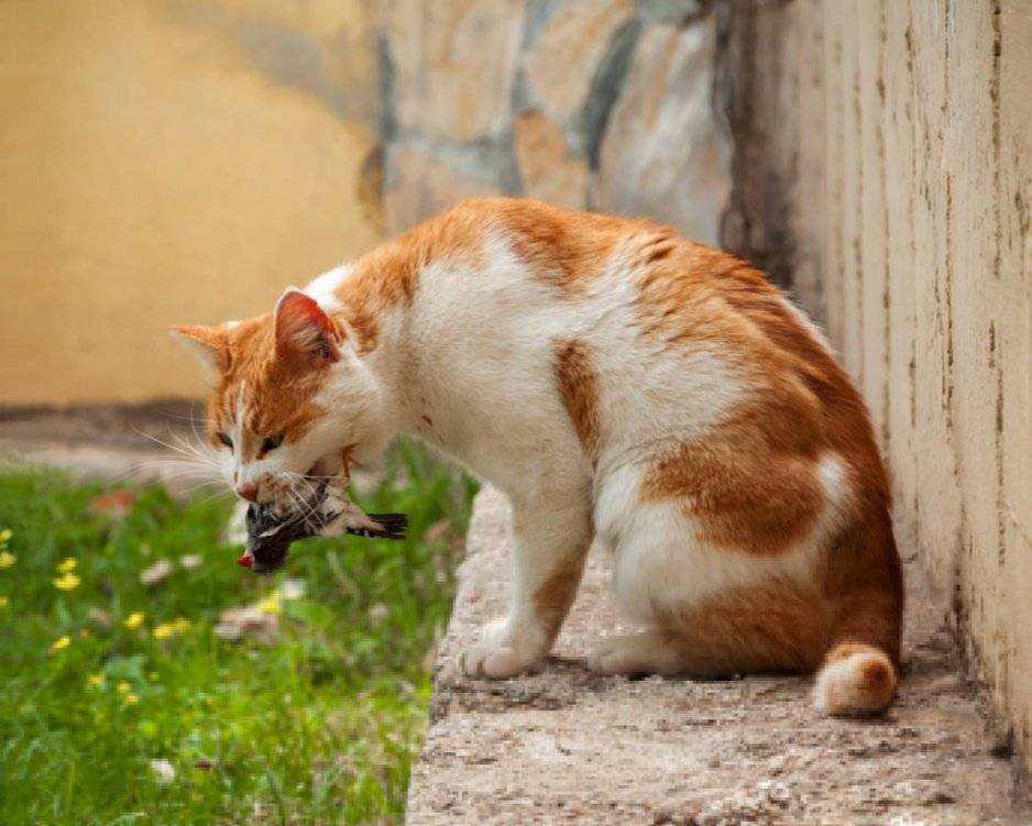 澳大利亚爆发40年来最严重的鼠灾,为何决不能放1000只猫来灭鼠?
