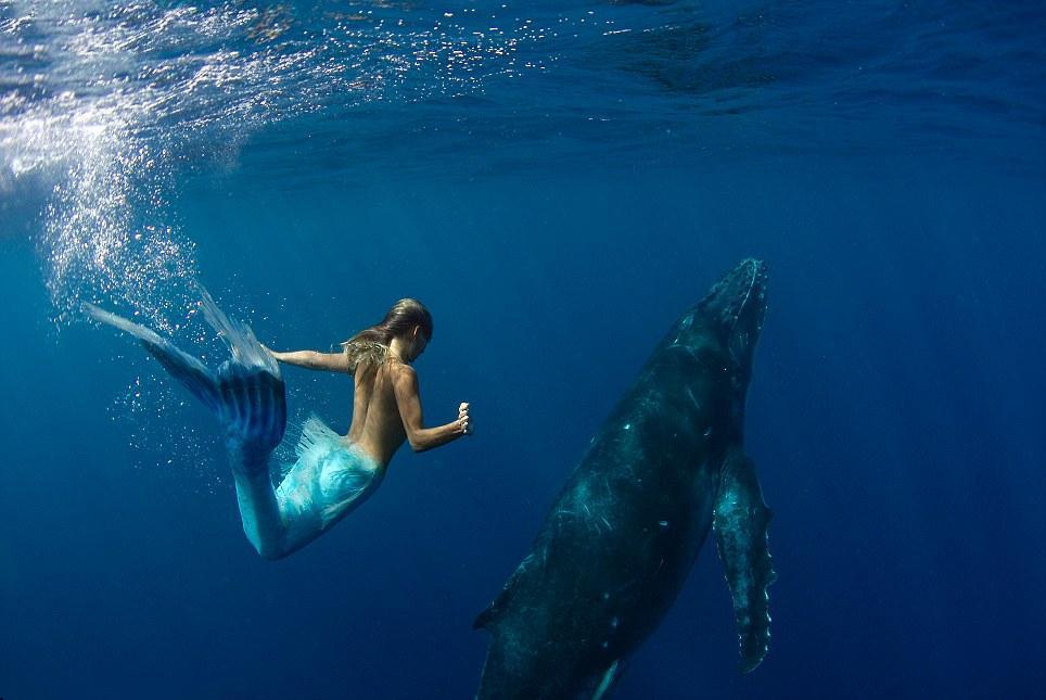 """""""美人鱼""""真的存在吗?1975年,人类捕获长有乳房的生物是什么?"""