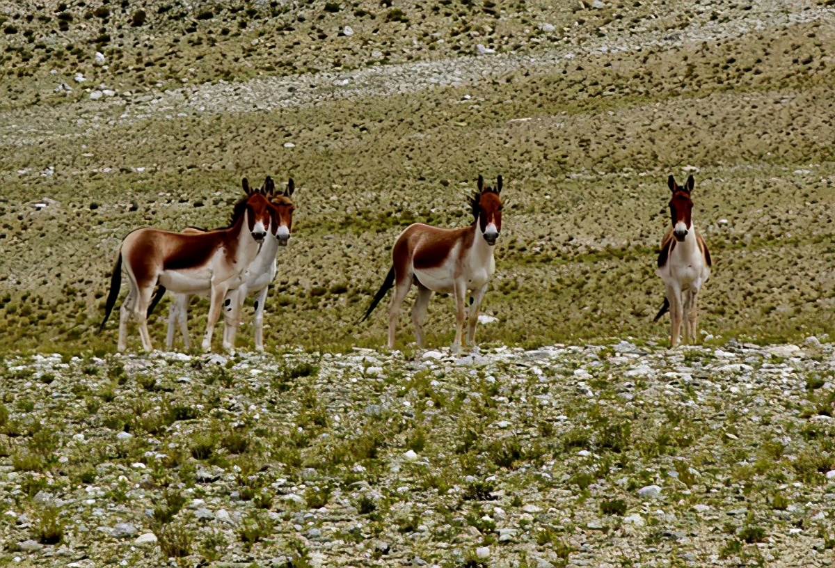 """绒辖沟秘境,西藏人都不一定了解的喜马拉雅""""第六条沟"""""""