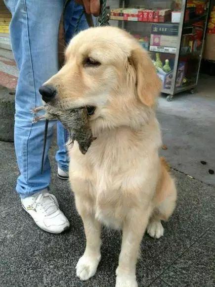 """旺家的狗狗一般有这6个""""特点"""",你家狗中了几个?"""