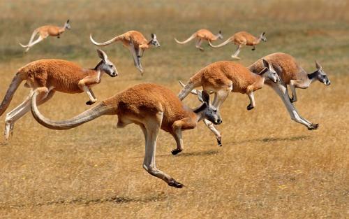 各国最具代表性的动物,你知道多少?