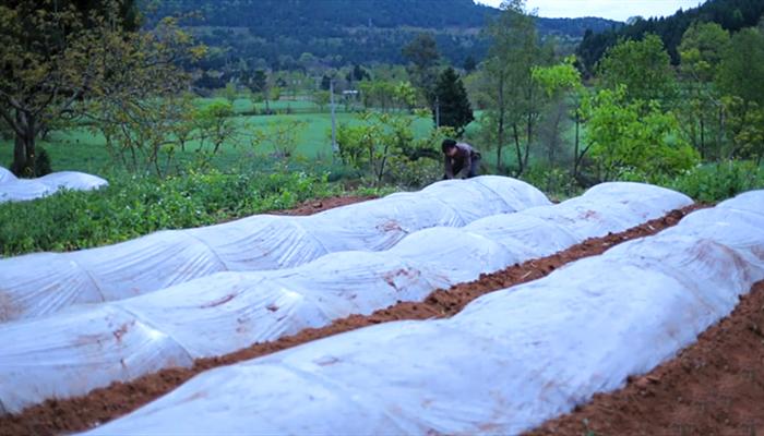 李子柒:春种一粒,秋收百颗,大米就是这样种出来的,珍惜粮食