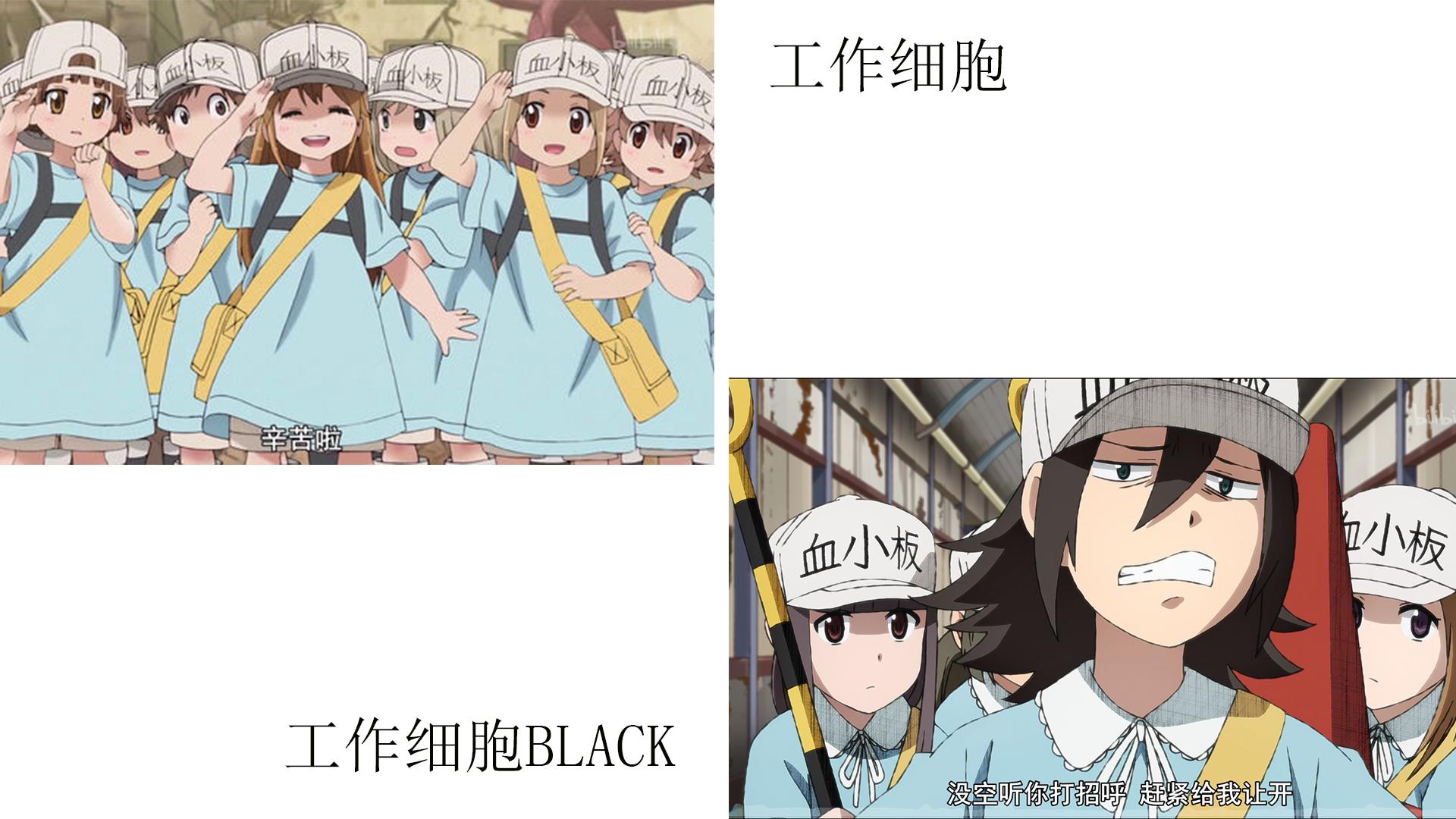 為什麼《工作細胞BLACK》的細胞比本傳中還要好看啊?混蛋