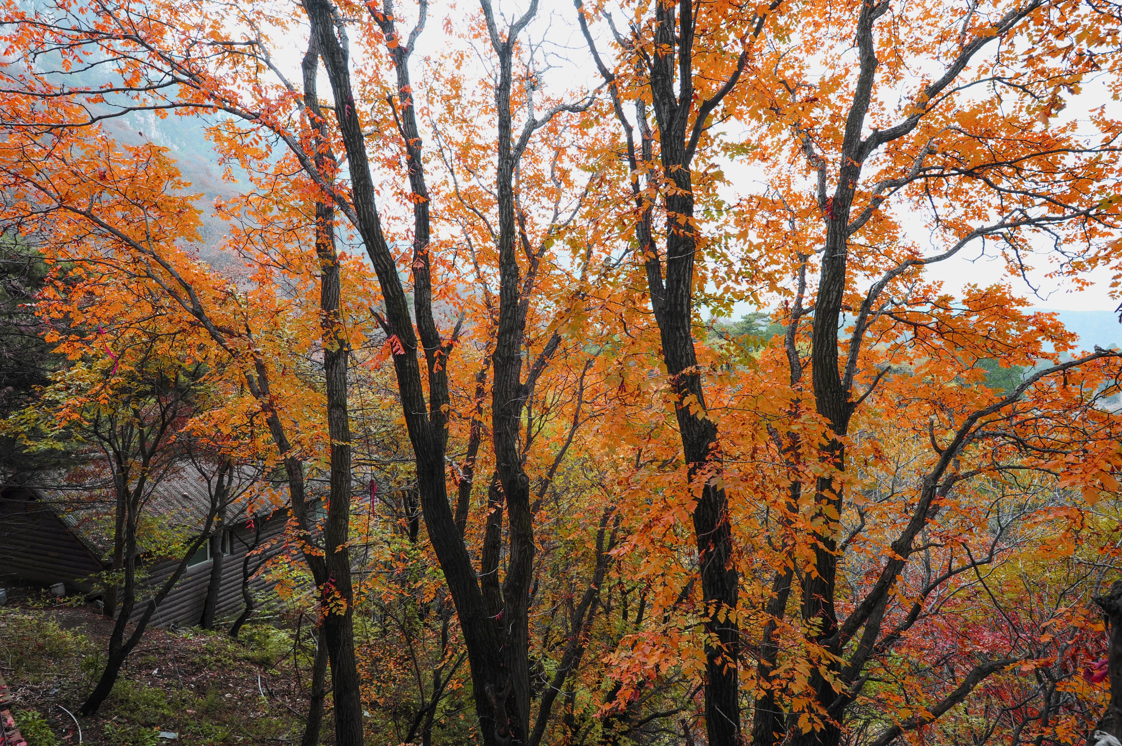来吧!一起点亮深秋的河东