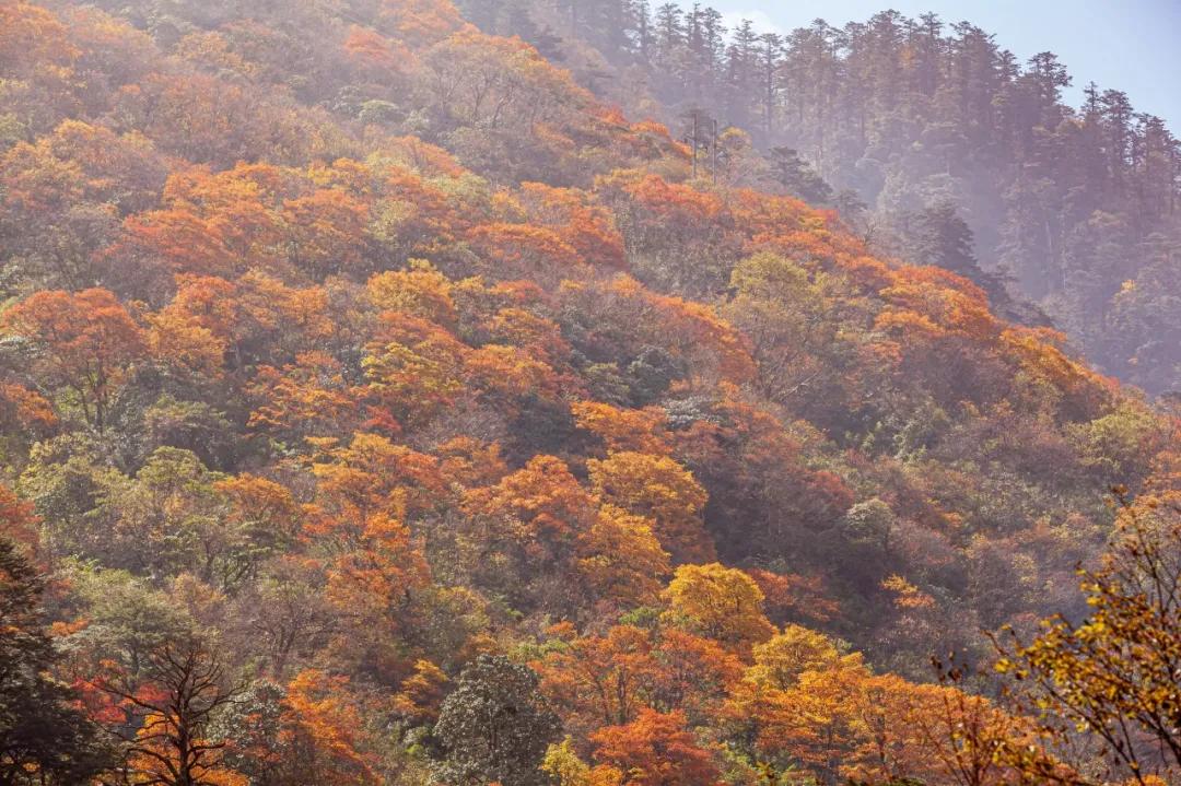没想到,峨眉山以这样的方式告别秋天