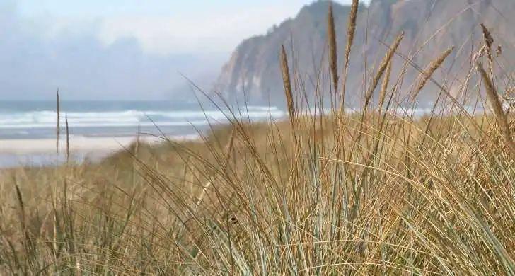 换种姿势享受野营,8大俄勒冈海滨房车野营目的地推荐