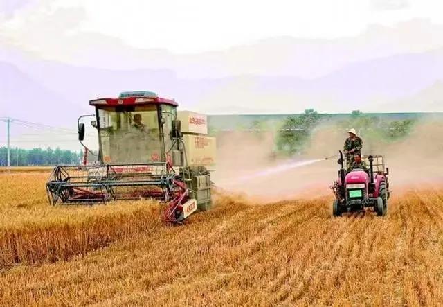 怪事连连:河北邢台农民割麦子污染环境