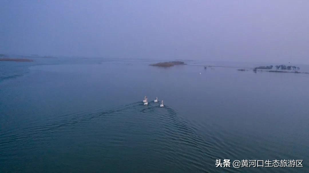 【黄河口生态旅游区】诗情画意冬韵浓 候鸟齐聚黄河口
