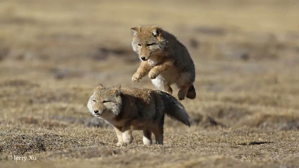 论极限生存,这些动物才是最强王者
