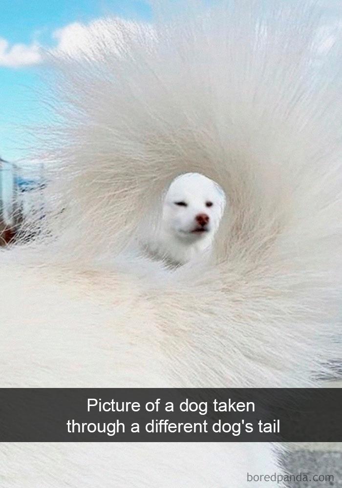 一組有關狗的搞笑照,圖4是一只小白狗,在泥坑打滾後的照片
