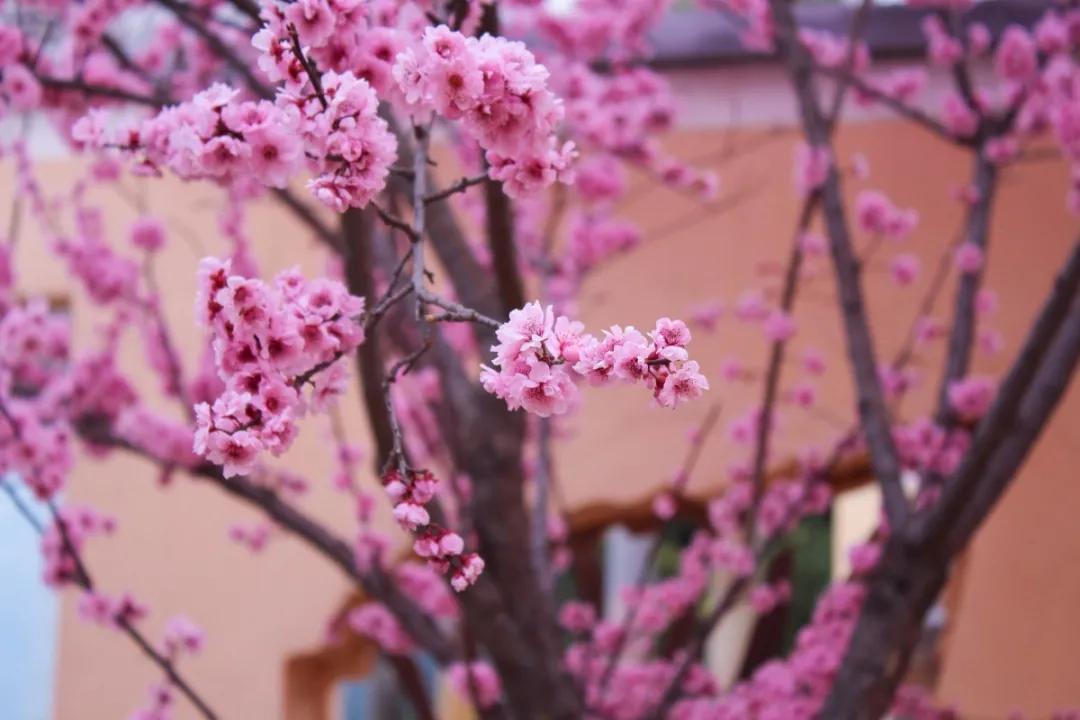 """三月与我来约""""汇"""",且听风吟,醉看繁花,抱得春色归"""