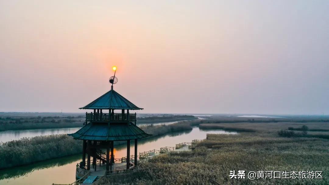 【黄河口生态旅游区】芦草悠悠 烟波浩渺 候鸟齐飞 绘就人鸟和谐画卷