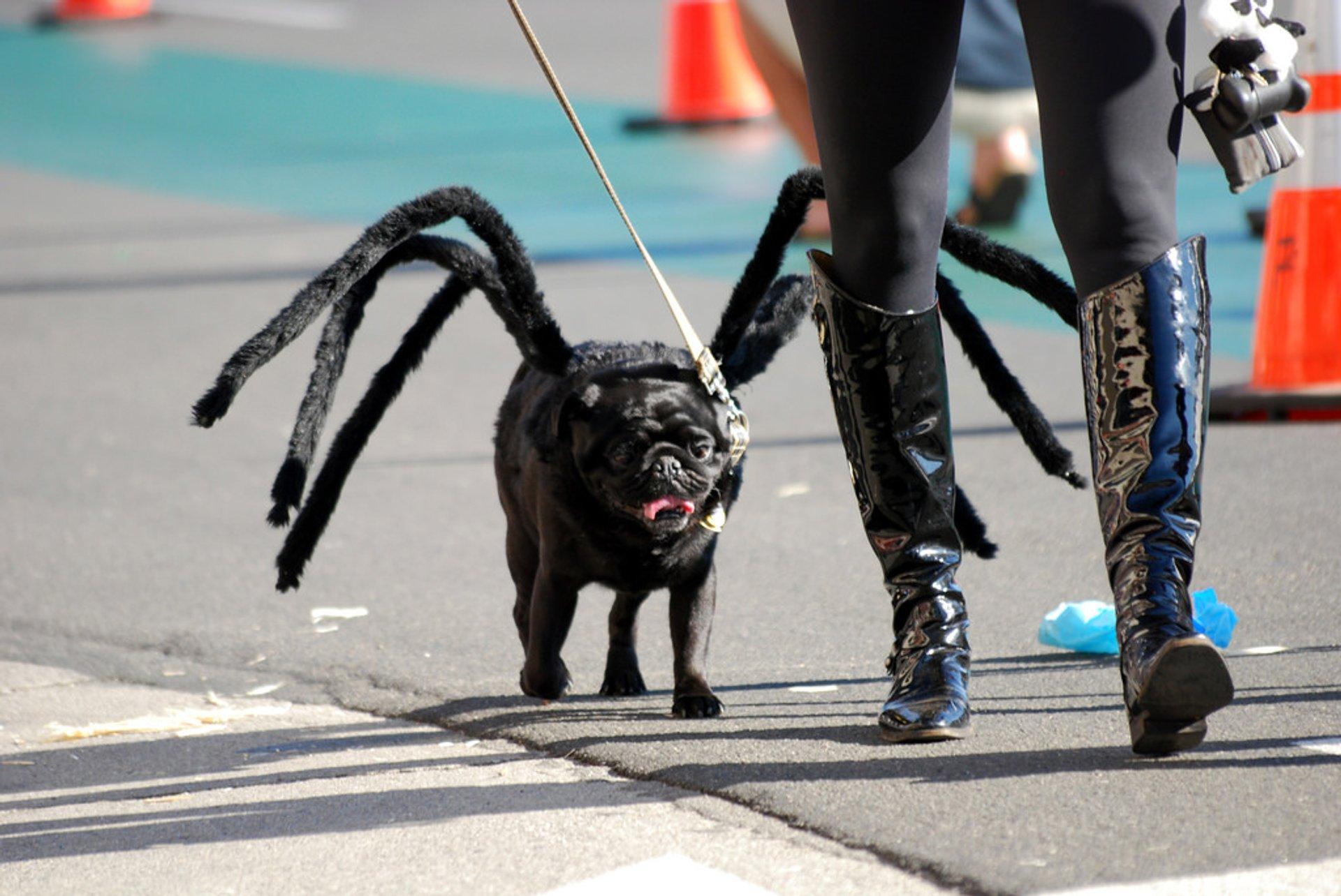 狗狗穿上鬼娃服装,狂奔甩菜刀,网友:钱都给你买零食,别过来