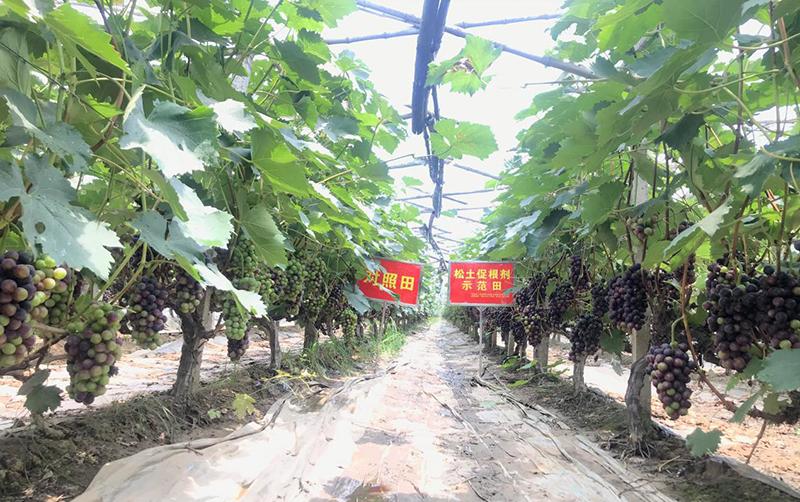 农资企业互联网化,潜力巨大