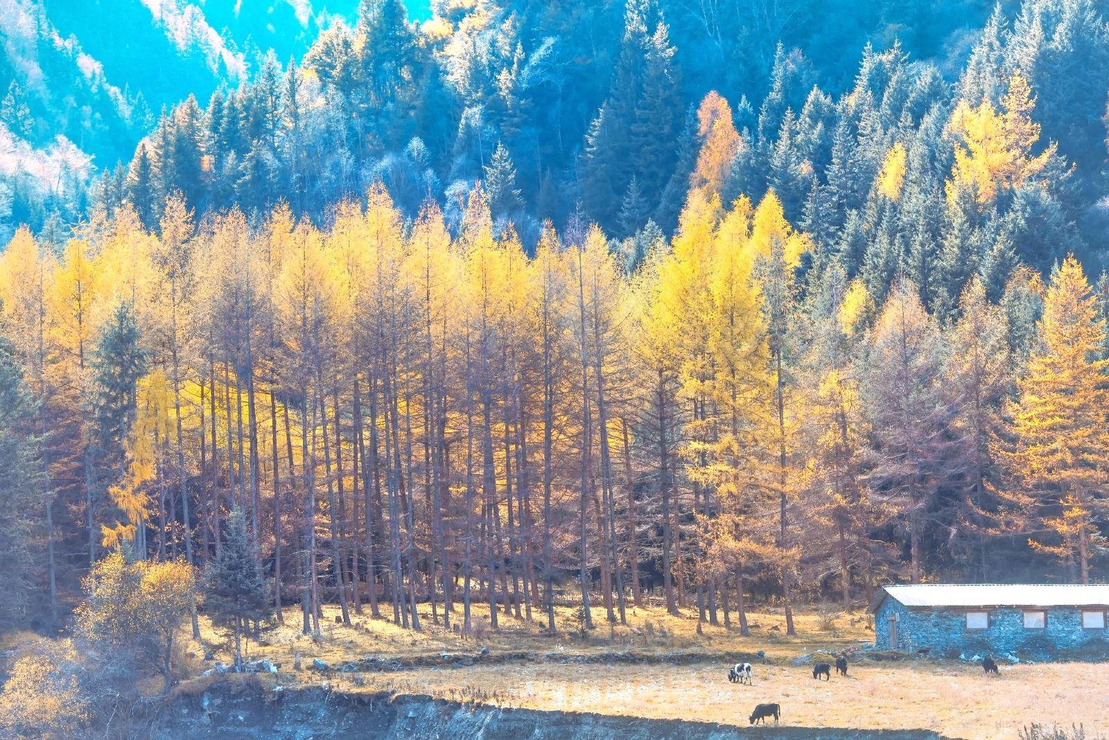 我国最大的红叶景区,相当于180个香山,这里藏着最美的秋天