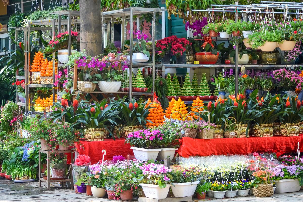 現在去花市,5種花別買!賣花人:不懂的人才喜歡買