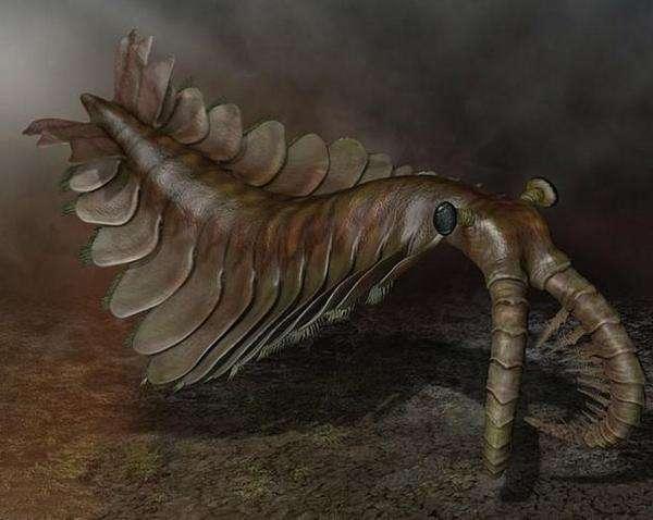 丑陋无比的奇虾,是5亿多年前海洋中无可争议的恐怖分子