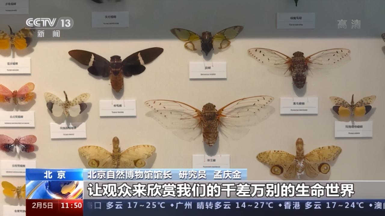 恐龍如何飛上枝頭?來北京自然博物館尋找答案