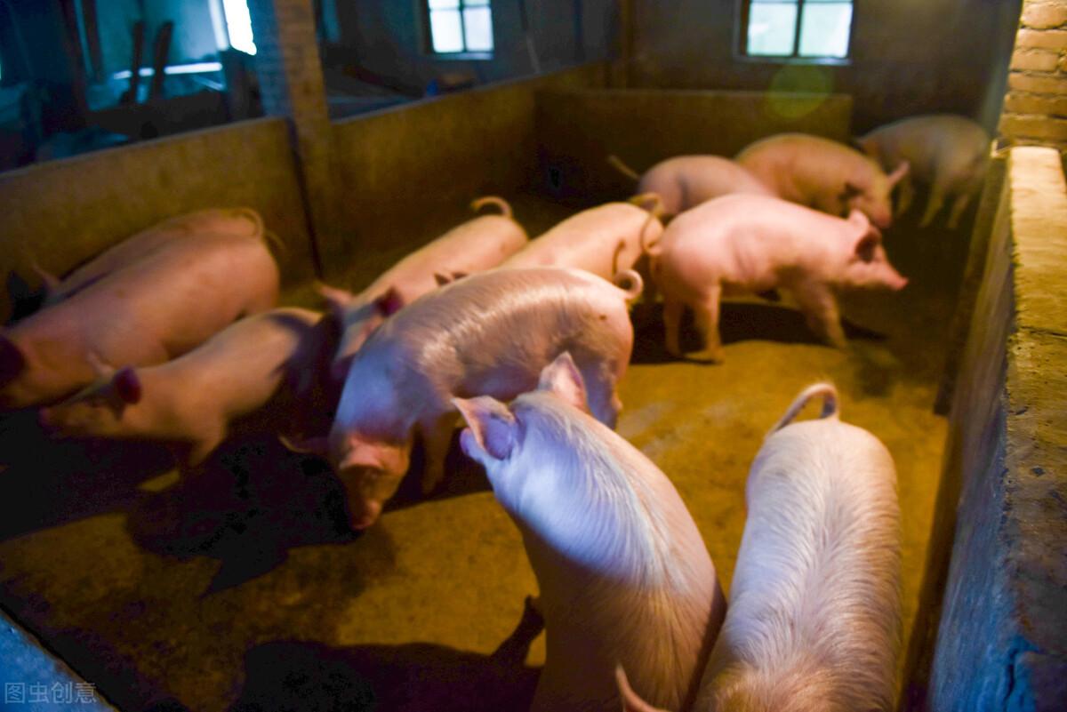 生猪价格高、低差如此之大,养殖行业不稳定,说明了什么?
