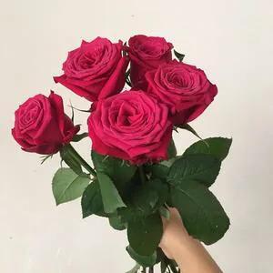 紅玫瑰品種簡介